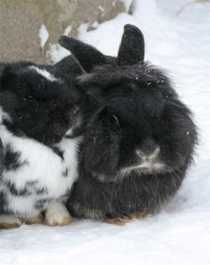 Zwei Kaninchen im Schnee