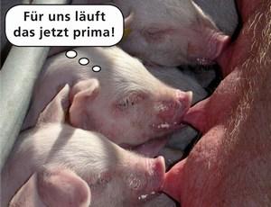 Copyright MSD Tiergesundheit