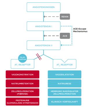 Wirkungsweise eines Angiotensin-II-Rezeptor-Antagonisten-Syptyp AT1
