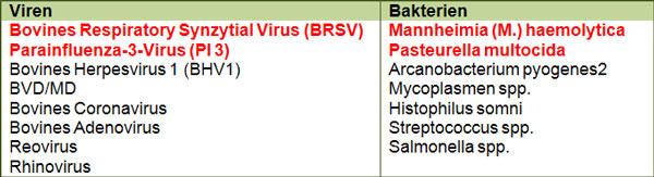 Virale und bakterielle Erreger der EBP