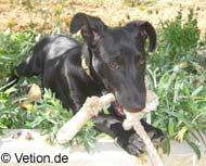 Junger Hund freut sich über sein Spielzeug