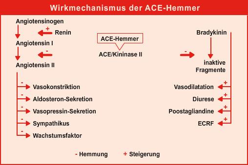 Wirkungsmechanismus von ACE-Hemmern