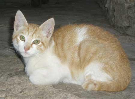 Nicht oder nur mangelhaft ernährte und entwurmte Katzen sind anfälliger für Infektionen.