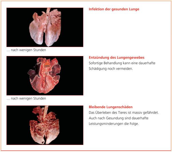 Pathologische Veränderungen der Lunge