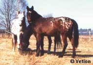 Pferde Startseite