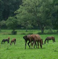 Jährlinge auf der Weide
