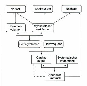 Regelkreis Herz-Kreislauf