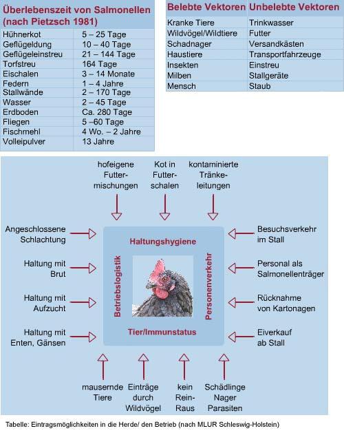 Überlebenszeiten von Salmonellen, Vektoren und Eintragsmöglichkeiten in die Herde