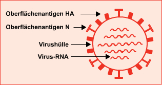 Aufbau eines Influenzavirus