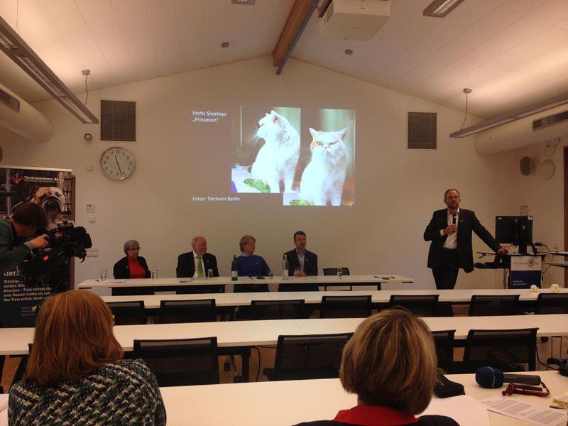 Gruber spricht zu kurzköpfigen Katzen mit  Gesundheitsschäden aufgrund von Zucht, mittig das  Podium der PK, links der rbb.