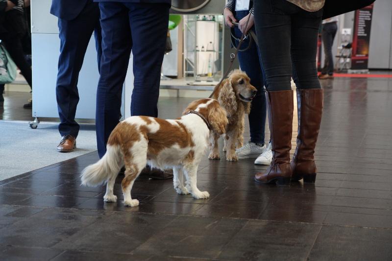 Auch Hunde sind auf dem Leipziger  Tierärztekongress gern gesehene Gäste
